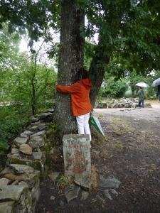 arbre carnac JPG