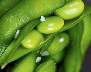 haricots verts 2014-02-06 à 14.38.26